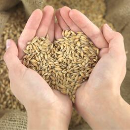 фото зерна пшениці в долонях