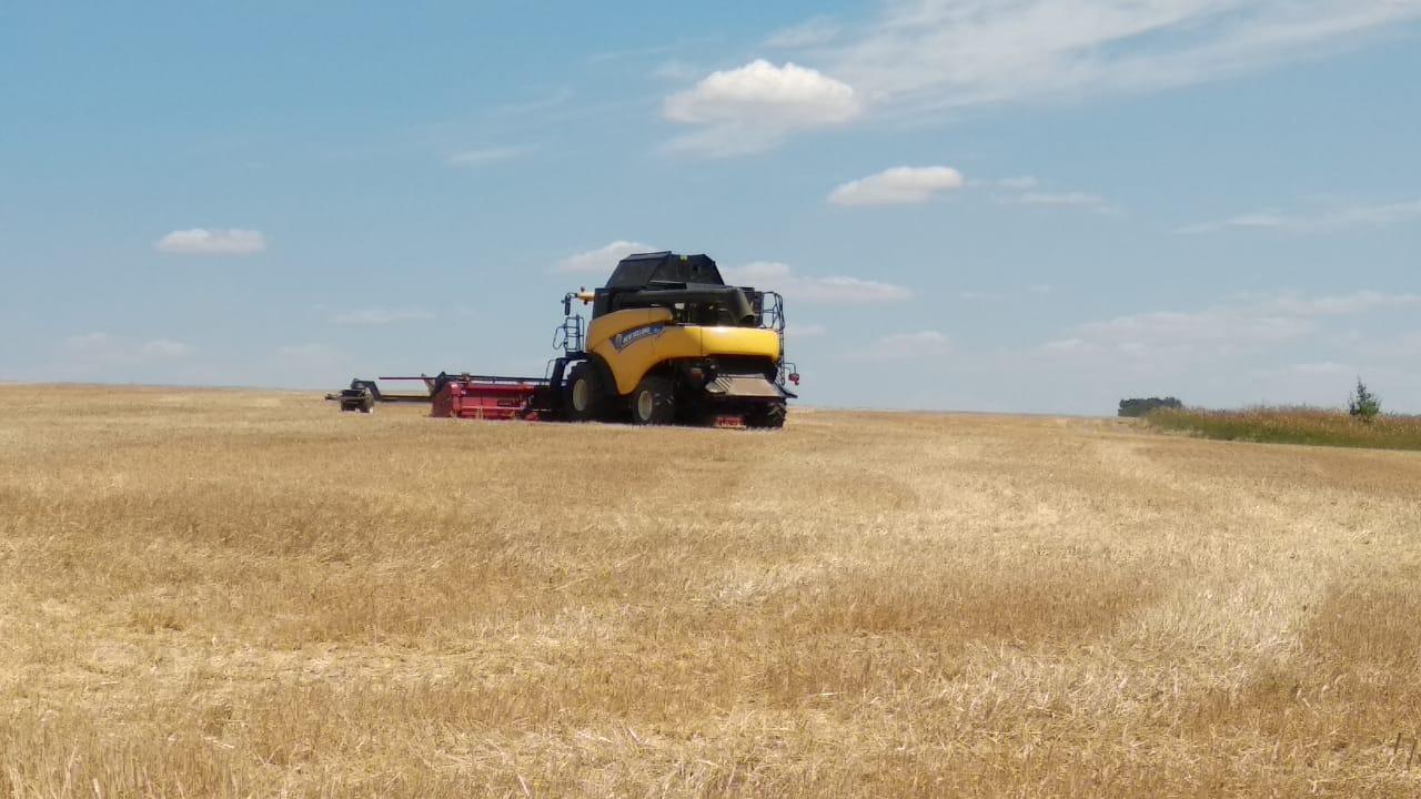 збирання зернових 2019